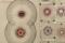 11 - La lente agonie de la brebis qu'on égorge (réservé)