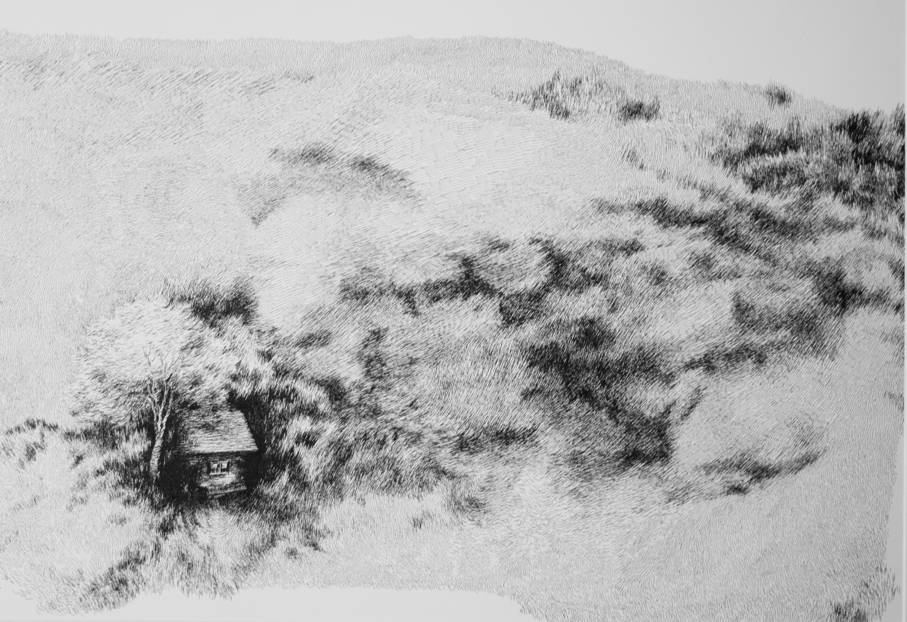 Nylso | Auprès de son arbre | Nylso