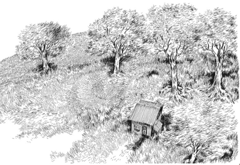 Nylso | Dernière cabane en haut | Nylso