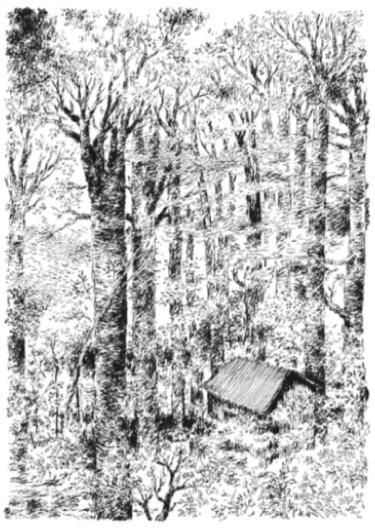 Nylso | Rideau d'arbres sombres et fermes | Nylso