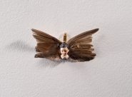 Maïssa Toulet Angelot à plumes