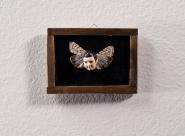 Maïssa Toulet Angelots à ailes de papillons