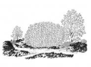 Un parc à Rennes Nylso