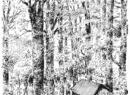 Rideau d'arbres sombres et fermes Nylso