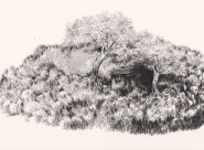Entre deux arbres Nylso