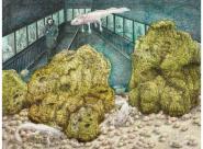 Axolotl / Le Jardin de Buffon Colette Portal